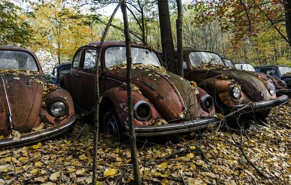 Picture autumn, machine, scrap