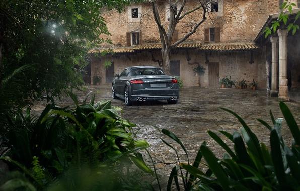 Picture Audi, Roadster, Car, Back, Sport, Rear, Flores, TTS, Ligth