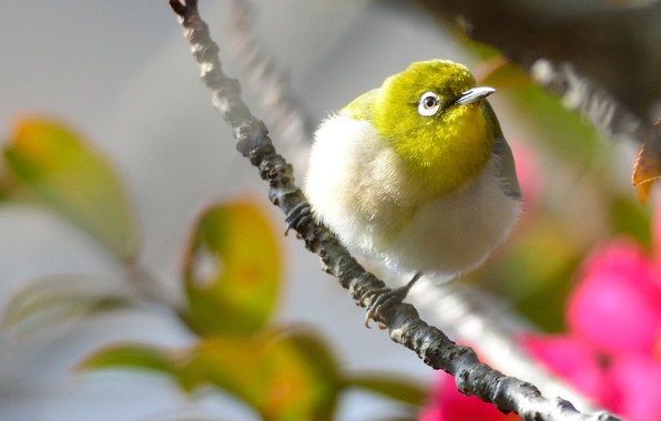 Picture flowers, bird, branch, pink, yellow, tail