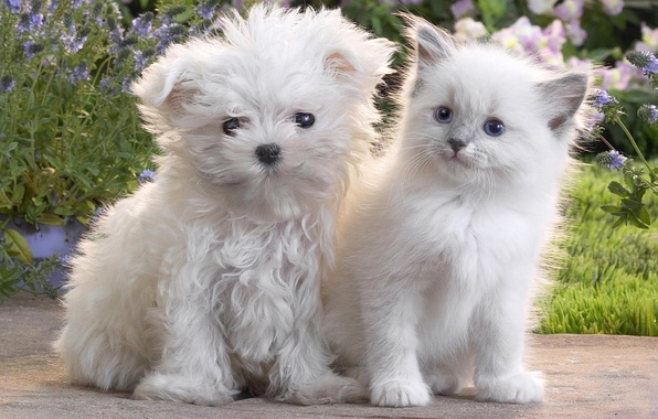 Picture cat, kitty, dog, puppy, fluffy, Dog, Cat, Kitten, Cute, Puppy