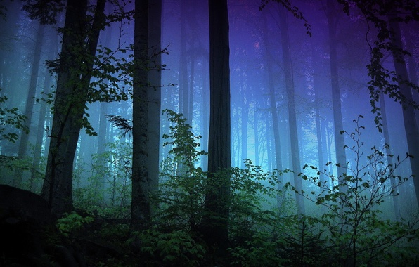 Picture lights, dark, forest, trees, blue