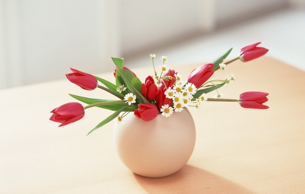 Picture leaves, flowers, red, green, background, Wallpaper, roses, chamomile, vase, flowers, wallpapers