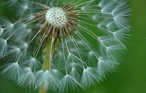 nature sunset grass dandelion - photo #43