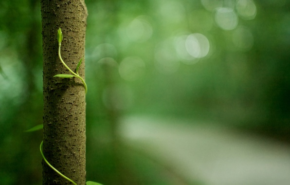 Picture greens, forest, macro, trees, nature, life, green, foliage, plants, trunk, bark, forest, life, macro photos, …