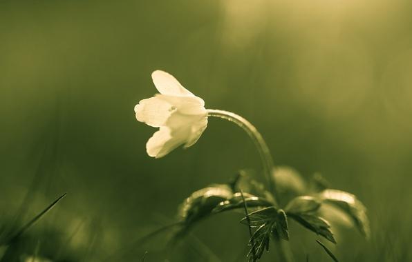 Photo wallpaper flower, macro, nature