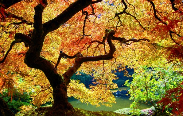 Picture Tree, Autumn, Leaves