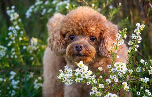 Picture look, flowers, each, dog