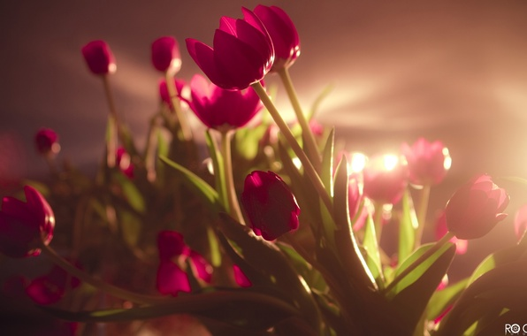 Picture field, ass, joy, happiness, flowers, smile, girls, holiday, bouquet, pink, beautiful, tulips, bright, March 8, ...