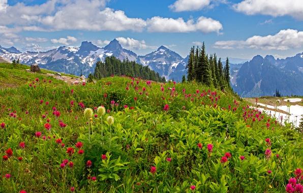 Picture grass, clouds, trees, flowers, mountains, stones, Washington, USA, lawn, Mount Rainier National Park