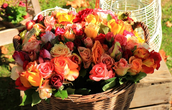 Picture basket, roses, bouquet, buds, a lot