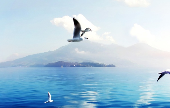 Picture SEA, WATER, MOUNTAINS, HORIZON, The OCEAN, The SKY, WINGS, CLOUDS, FLIGHT, RUFFLE, SEAGULL, SURFACE, BIRDS, …