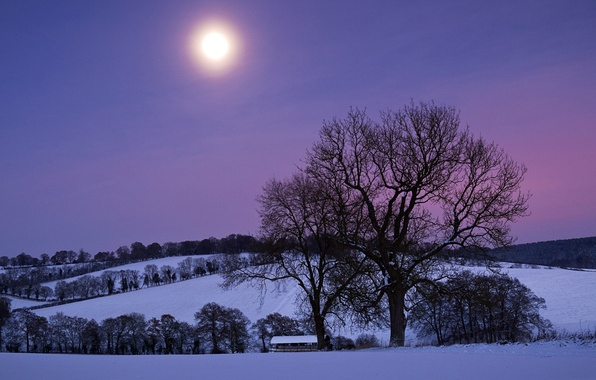 Picture the sky, snow, trees, night, the moon, Winter, hill, purple