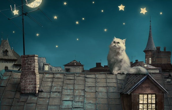 Picture the sky, stars, night, kitty, the moon, home, tale, roof, fantasy, moon, house, fantasy, sky, …