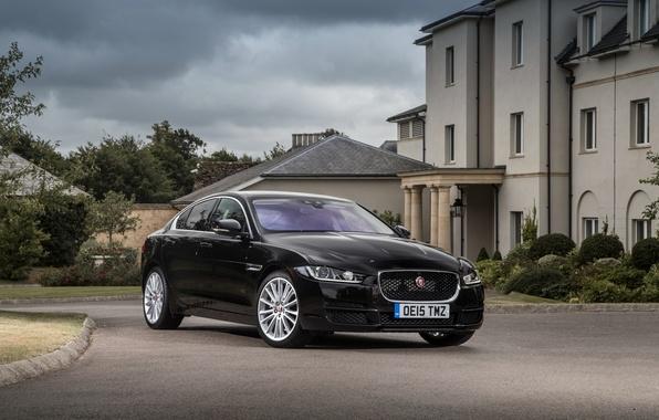 Picture Jaguar, Jaguar, 2015