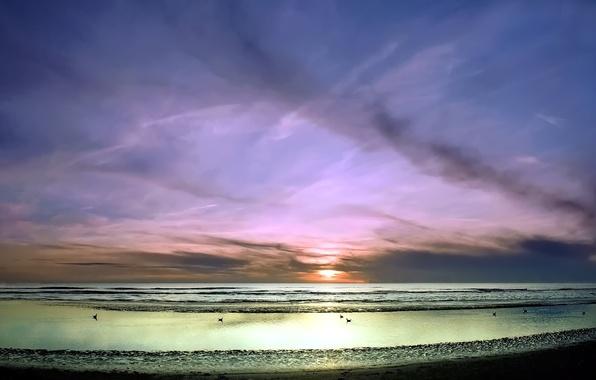 Picture sea, wave, the sky, sunset, birds, shore