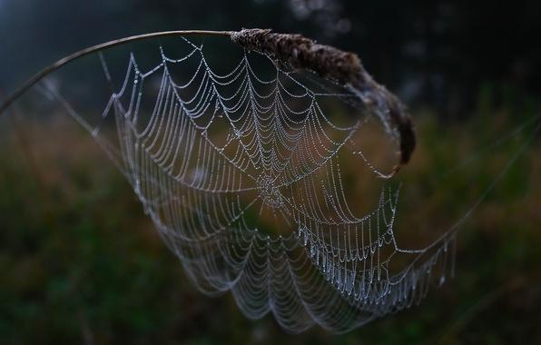 Photo wallpaper Web, drops
