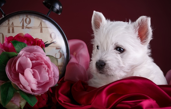 Picture white, flowers, watch, puppy, fabric