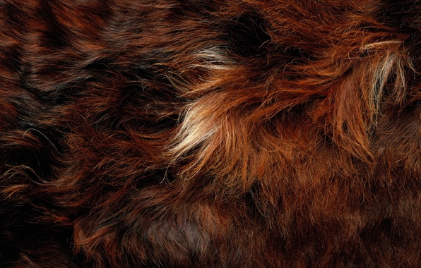 Picture animal, hair, fur