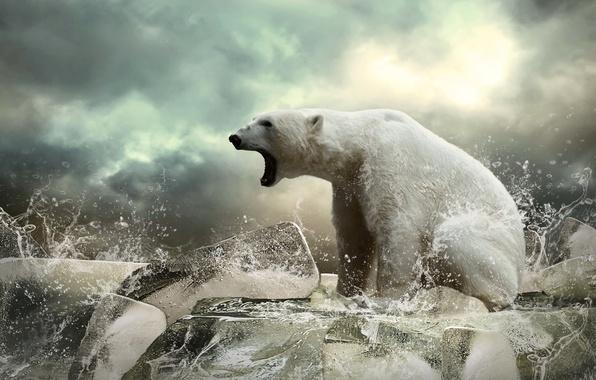 Picture ice, bear, ice, beast, polar bear