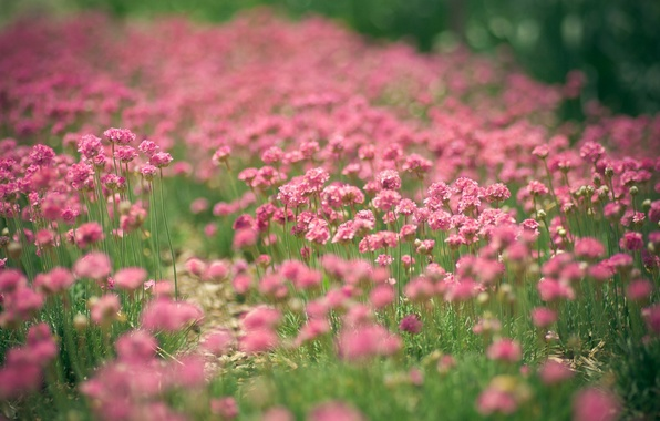 Picture flowers, pink, a lot