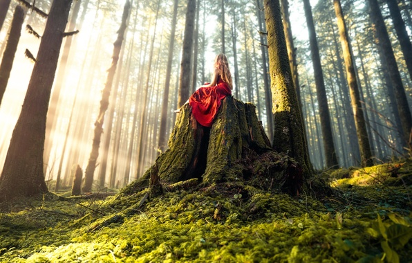 Picture forest, girl, dress, Lizzy Gadd, Woodland Magic