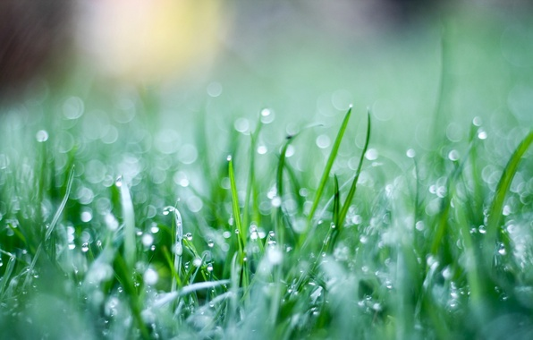 Picture greens, grass, drops, macro, green, background, Wallpaper, weed, widescreen, full screen, HD wallpapers