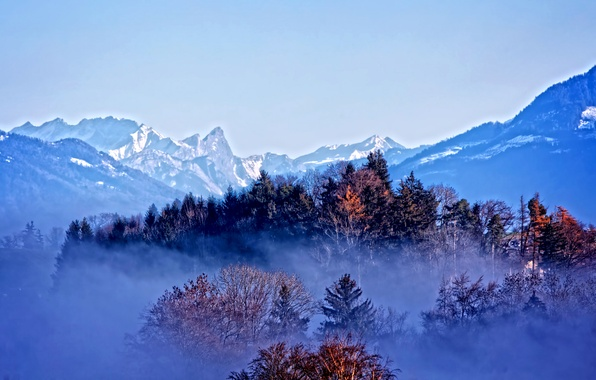 Picture autumn, forest, snow, trees, mountains, fog