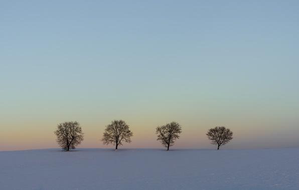 Picture winter, field, snow, trees, landscape