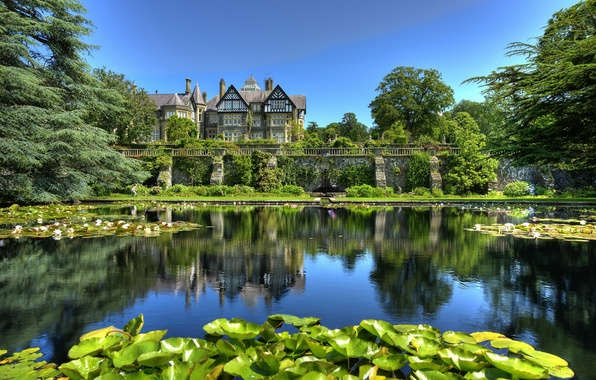Picture leaves, pond, Park, Lily, England, England, Wales, Wales, Tyn-y-Groes