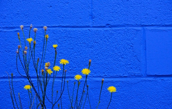 Photo wallpaper color, flowers, wall