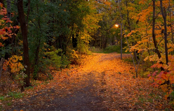 Picture autumn, leaves, trees, nature, Park, photo, trail, lantern