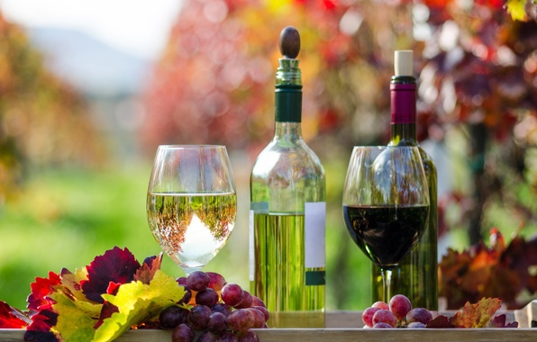 Picture autumn, leaves, wine, red, white, glasses, grapes, bottle