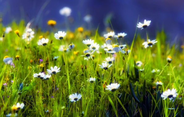 Picture greens, grass, green, glade, plants, Daisy