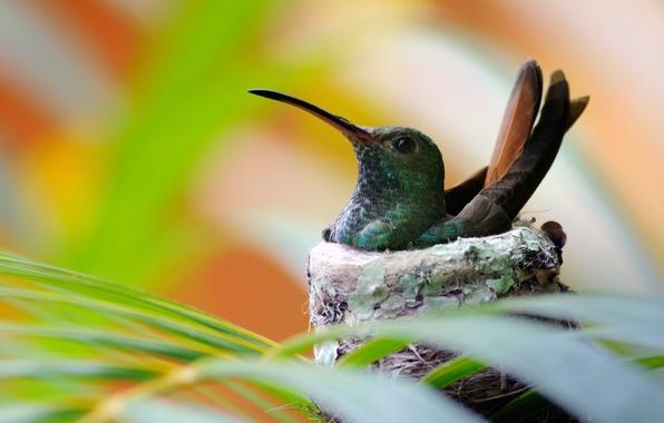 Picture Bird, Hummingbird, socket