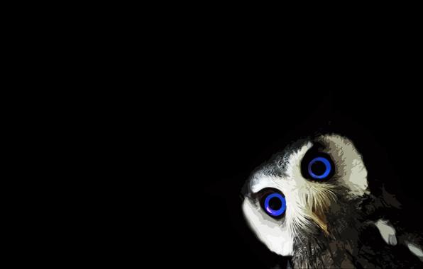 Picture black, animals, minimalism, blue eyes, black background, owl