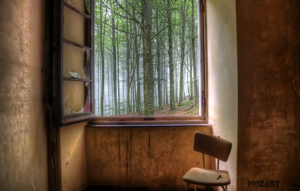 Picture forest, room, window