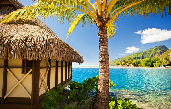 Picture sea, beach, tropics, palm trees, summer, hut, sunshine, beach, sea, ocean, paradise, vacation, palms, tropical