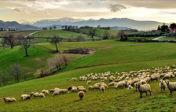 Picture the sky, grass, trees, mountains, house, hills, field, sheep, Italy, Campagna, flock