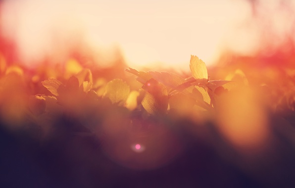 Picture summer, leaves, the sun, macro, glare, dawn, morning, bokeh