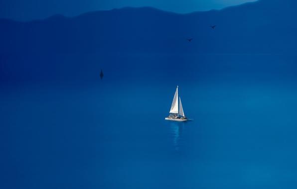 Picture sea, birds, boat