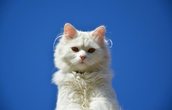 Picture cat, eyes, cat, Koshak