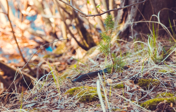 Picture forest, grass, look, leaves, macro, nature, tree, branch, tree, moss, snake, beauty, branch, spring, snakes, …