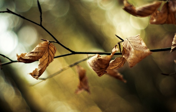 Picture leaves, macro, trees, background, tree, widescreen, Wallpaper, blur, branch, wallpaper, leaves, trees, widescreen, background, leaves, …