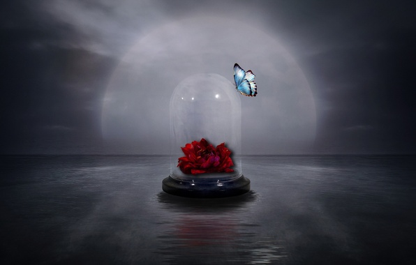 Picture flower, style, background, butterfly