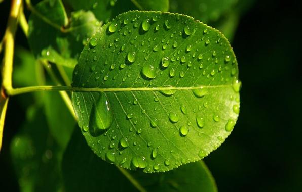 Picture autumn, drops, Rosa, Sheet, green, progulki