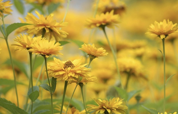Picture flowers, background, yellow, blur