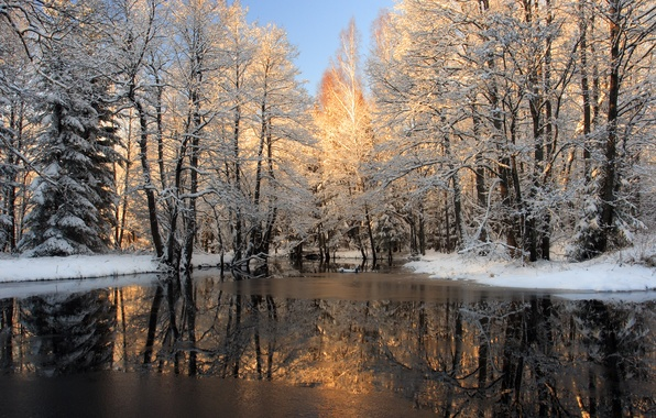 Picture winter, water, snow, trees, nature, photo, ice