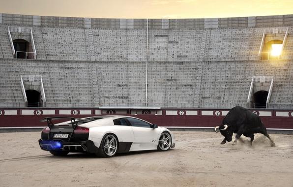 Picture Lambo, supercar, arena, bull, lamborghini murcielago lp670-4 sv