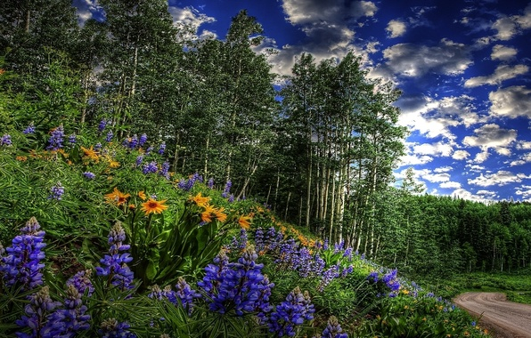 Picture ROAD, FOREST, GRASS, The SKY, CLOUDS, GREENS, FLOWERS, SPRING, TREES, RASTITELNOSTI, GROVE, The BUSHES