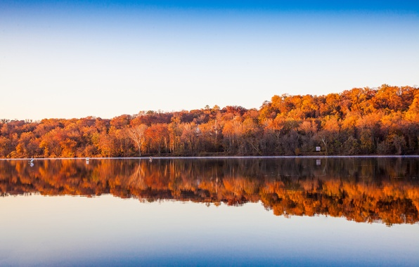 Picture the sky, trees, lake, reflection, mirror, the shore of the lake